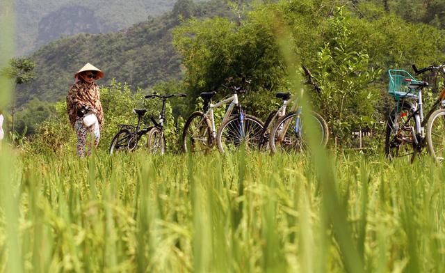Để khám phá những cánh đồng lúa chín vàng, bạn nên thuê 1 chiếc xe đạp để dạo khắp những bản làng ở Mai Châu.