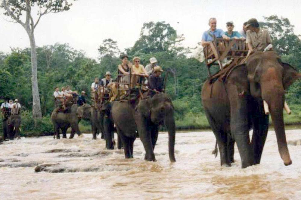 Điểm du lịch hấp dẫn: Làng voi Nhơn Hòa