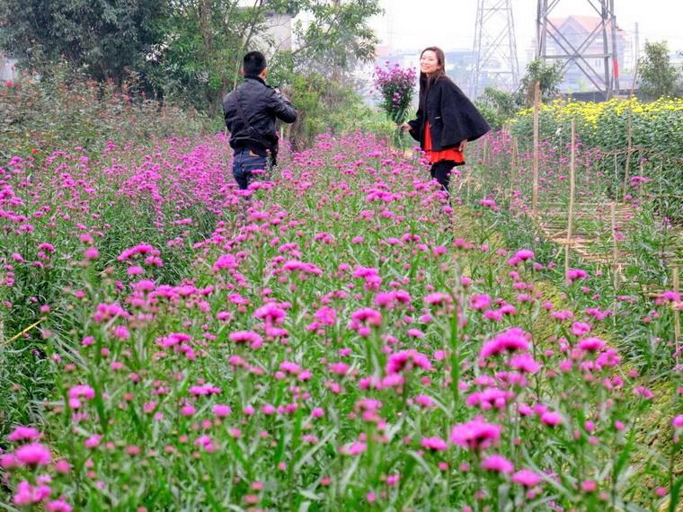 Ghé thăm các làng trồng hoa truyền thống