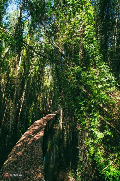 Con đường xuyên rừng Tràm