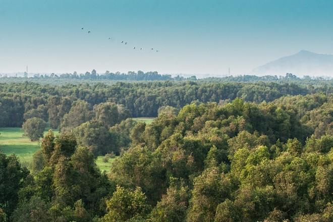 Du khách có thể tới đài quan sát ở giữa rừng, phóng tầm mắt ra không gian rộng lớn ngút ngàn. Nếu tới đây vào lúc 17-18h, bạn có thể thấy những đàn chim về tổ.