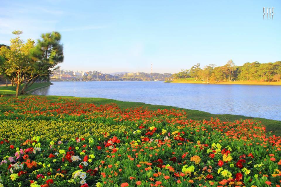 Đà Lạt được mệnh danh là thành phố của ngàn hoa, với hàng trăm loài hoa khoe sắc quanh năm.