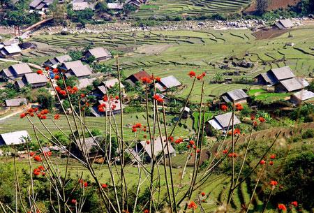 Sapa xinh tươi với những nếp nhà xen lẫn đồng ruộng thiên nhiên