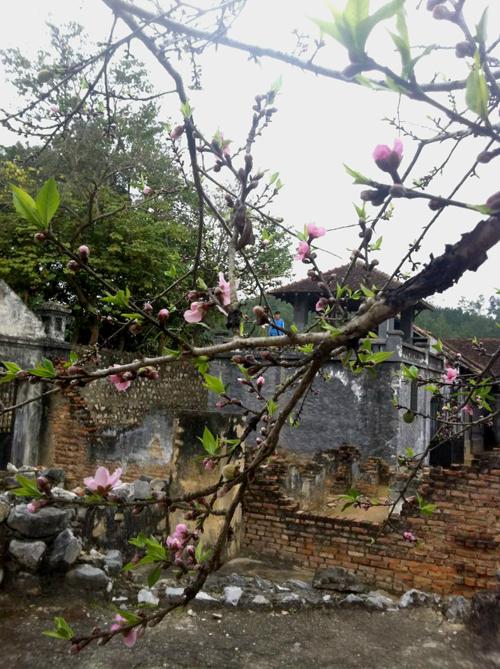 Nhà tù Sơn La nổi tiếng với cây đào Tô Hiệu