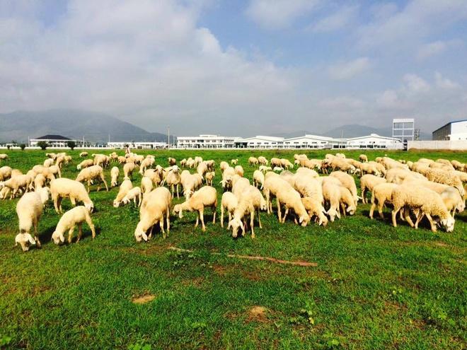 Đồi Cừu - Suối Nghệ, huyện Châu Đức.
