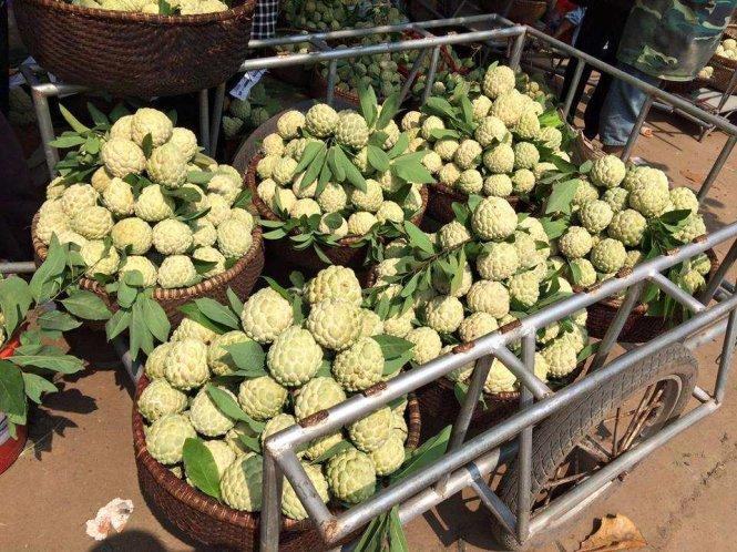 Chớm thu thăm chợ na Đồng Bành
