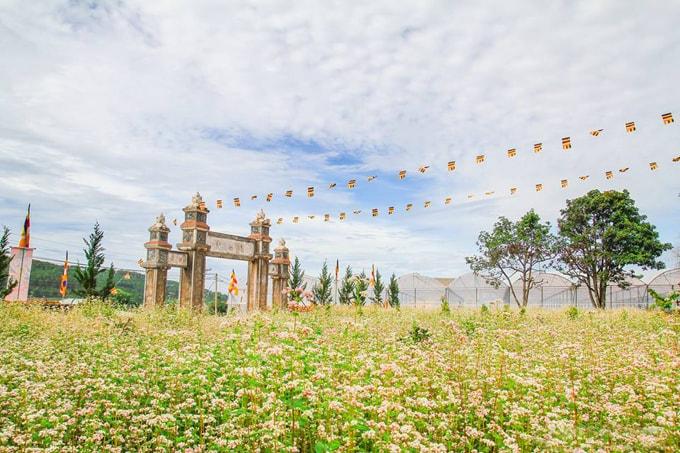 cánh đồng hoa tam giác mạch đà lạt-min