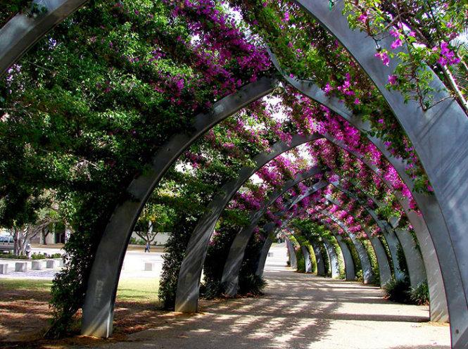 Đường hoa ở Brisbane, Úc