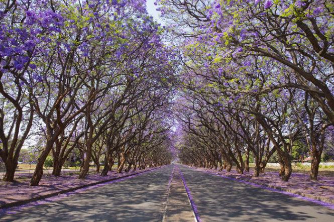 Đại lộ Milton, Harare, Zimbabwe