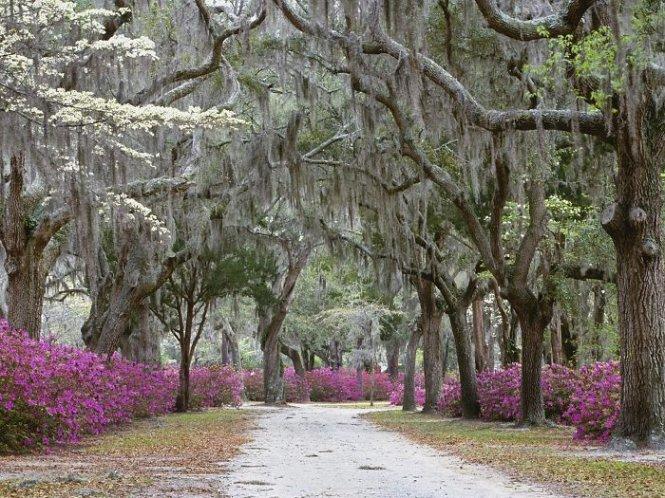 Đường hoa ở Savannah, bang Georgia, Mỹ