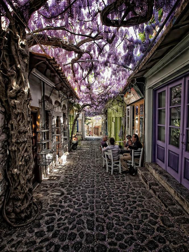 Đường hoa ở Molyvos, Lesvos, Hi Lạp