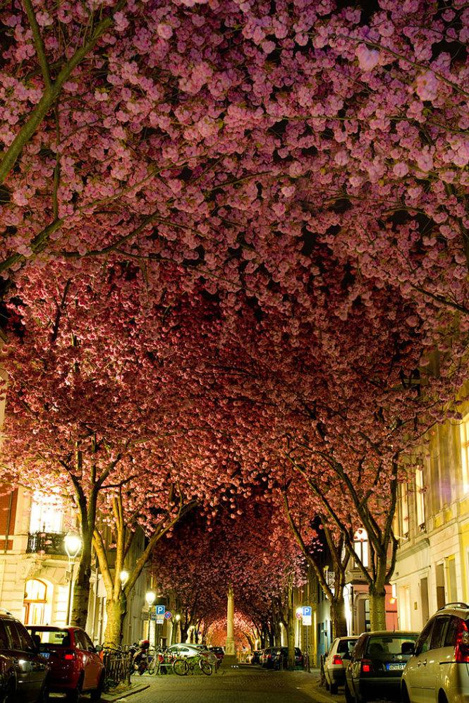 Đường hoa ở Bonn, Đức
