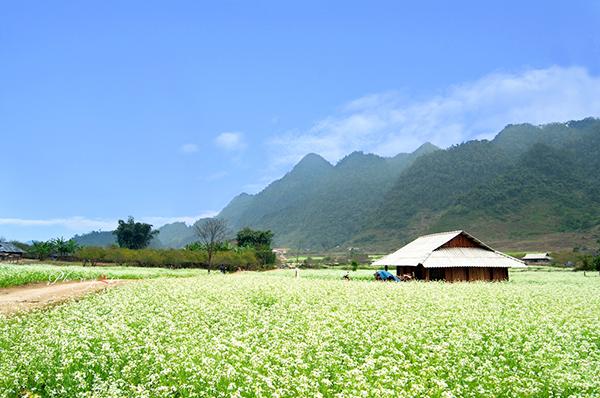Du lịch mộc châu mùa hoa cải nở rộ đẹp nhất trong năm