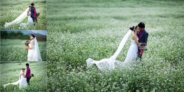 Các cặp đôi lên Mộc Châu chụp ảnh cưới mùa hoa cải