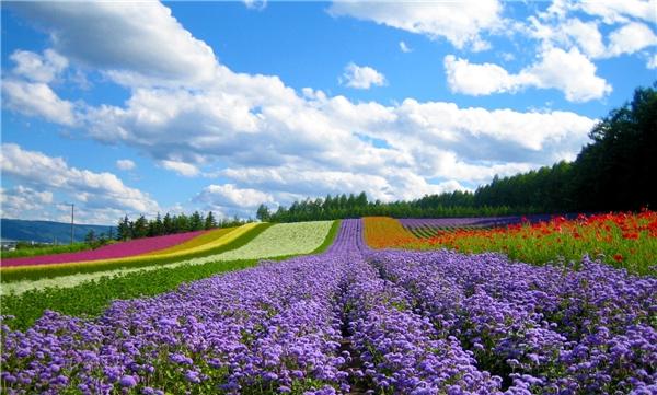 Những sắc hoa Đà Lạt như dã quỳ, cải trắng, hướng dương, phong lan… càng tô điểm cho phố núi thêm phần rực rỡ