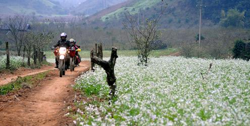 Đồi hoa cải trắng Mộc Châu mê hoặc giới trẻ
