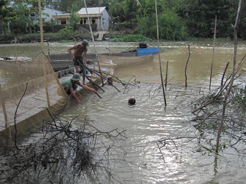Cảnh dỡ chà trên sông Ô Môn chảy qua Cần Thơ.