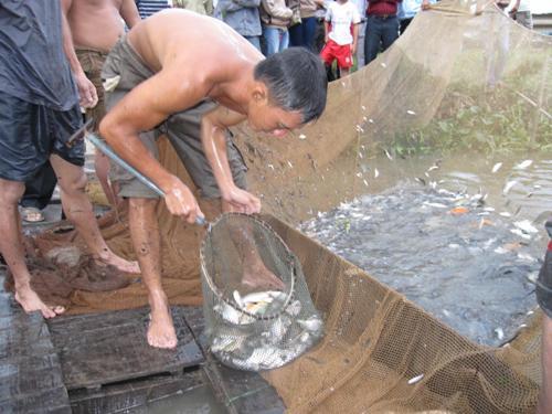 Xúc cá cho vào ghe rọng.