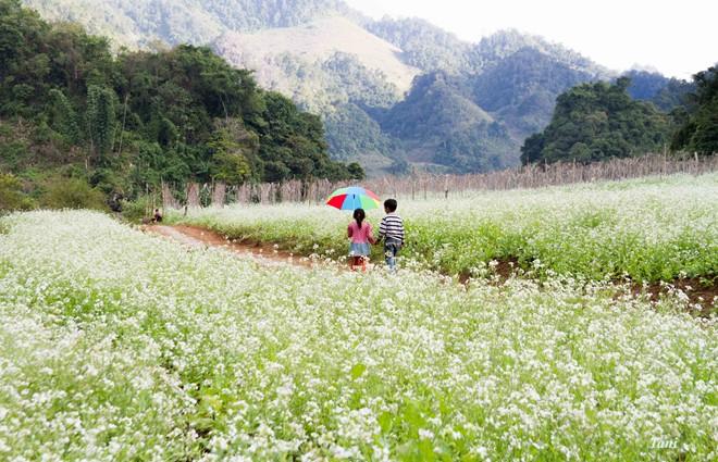 Cánh đồng hoa cải trắng gắn liền với tuổi thơ của các em nhỏ nơi đây.