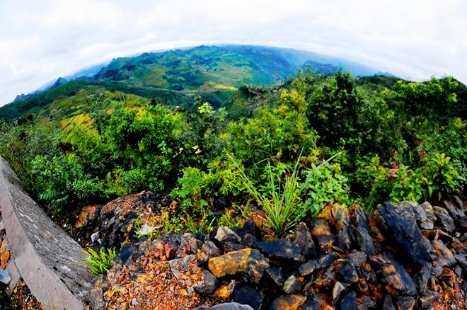 Tam giác mạch đầu mùa rực rỡ ở Hà Giang
