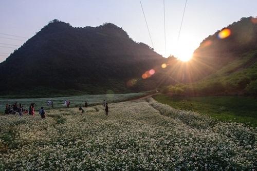 Hoa cải Mộc Châu trên đường đi bản Pa Phách