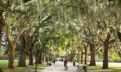 Khung cảnh ở Savannah lãng mạn như trong phim