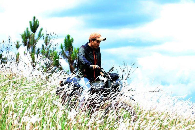 Ngọn đồi hoa cỏ lau trắng xóa tựa bông gòn ở Đà Lạt