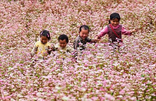 Dạo chơi trên những vùng hoa tam giác mạch đẹp nhất Việt Nam