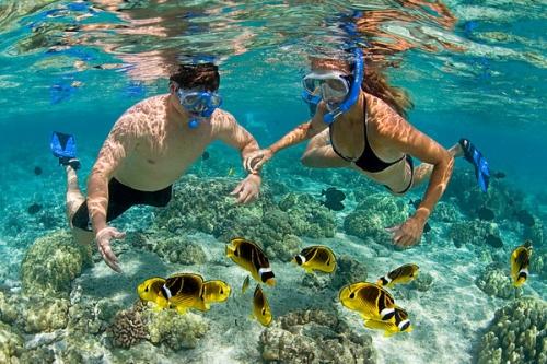 Vui chơi trên đảo: Lặn biển ngắm San Hô.