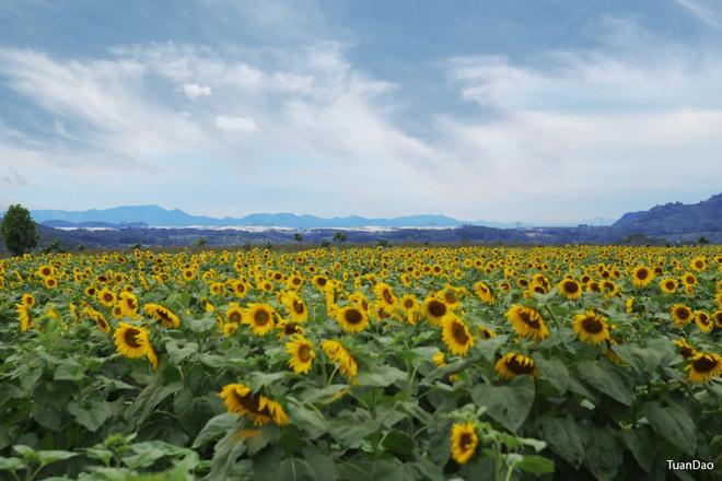 Nhiều người lo ngại rằng nếu tình trạng bẻ hoa tiếp tục diễn ra, công ty sẽ không tạo điều kiện để khách du lịch vào thăm nữa.