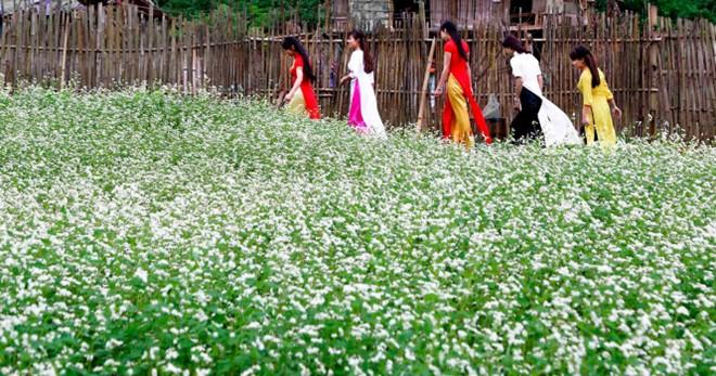 Hoa tam giác mạch được một số hộ dân ở trong vùng gieo chủ yếu để lấy hạt xay thành bột làm bánh. Họ có thể bán bột cho du khách tới tham quan với giá 20.000 đồng/kg.