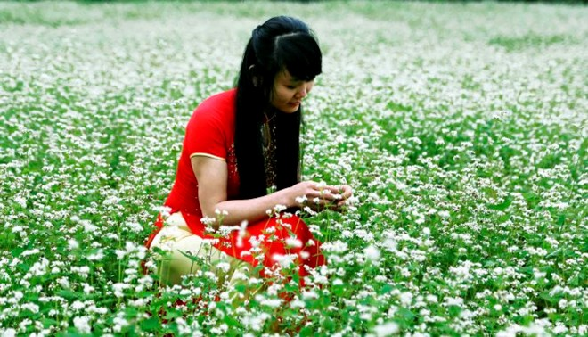 Còn lạ là bấy lâu chỉ nghe loài hoa này ở cao nguyên đá Đồng Văn (Hà Giang), nay vùng xứ Lạng cũng có, mà lại có vào mùa này.