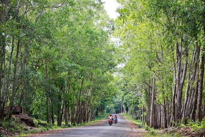 Con đường tuyệt đẹp dẫn vào khu công viên hồ