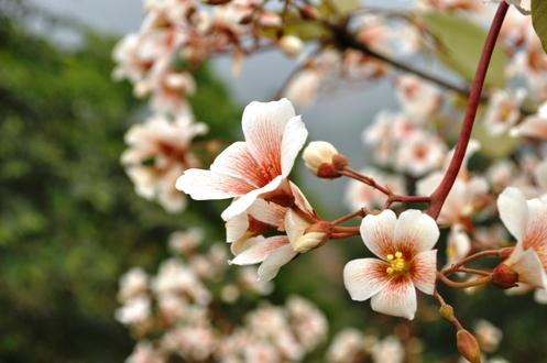Lên lịch phượt cùng những mùa hoa