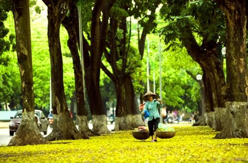Lung linh vẻ đẹp bình yên của mùa thu Hà Nội - Ảnh 2