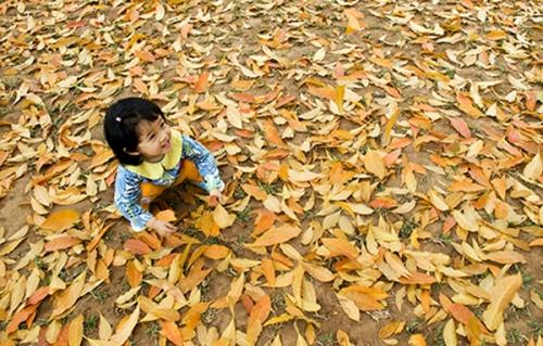 Lung linh vẻ đẹp bình yên của mùa thu Hà Nội - Ảnh 3
