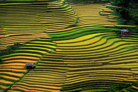 Ruộng bậc thang là niềm tự hào của người Hà Giang