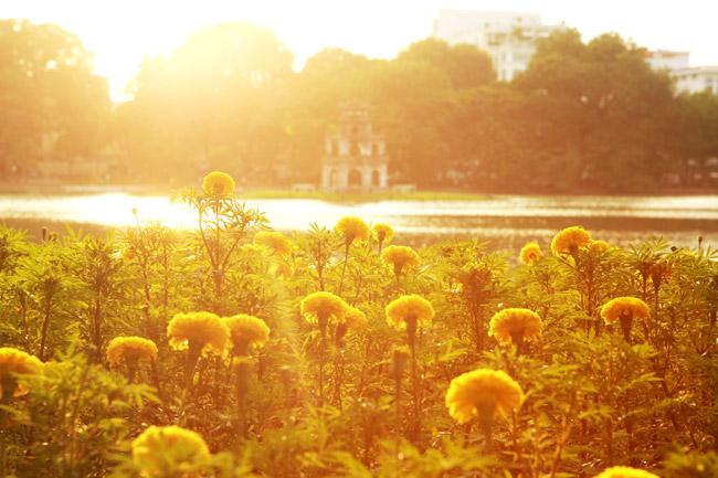 Ngắm Hà Nội thơ mộng, óng vàng mỗi chiều thu qua - 4