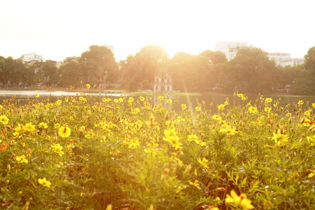 Ngắm Hà Nội thơ mộng, óng vàng mỗi chiều thu qua - 5