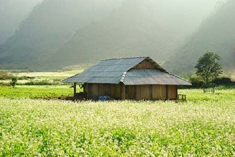 Những cánh đồng hoa cải đẹp mê hồn ở Mộc Châu mùa xuân