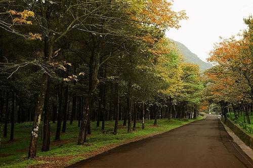 Khung cảnh lãng mạn trong rừng quốc gia