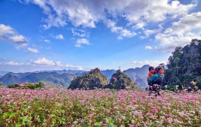 Những điểm chụp hoa tam giác mạch đẹp nhất ở Hà Giang