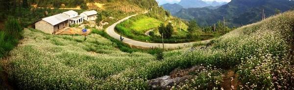 Những điểm ngắm tam giác mạch đẹp nhất ở Hà Giang 1