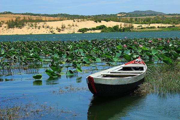 Chèo thuyền ngắm sen ở Bàu Trắng, Bàu Sen Phan Thiết