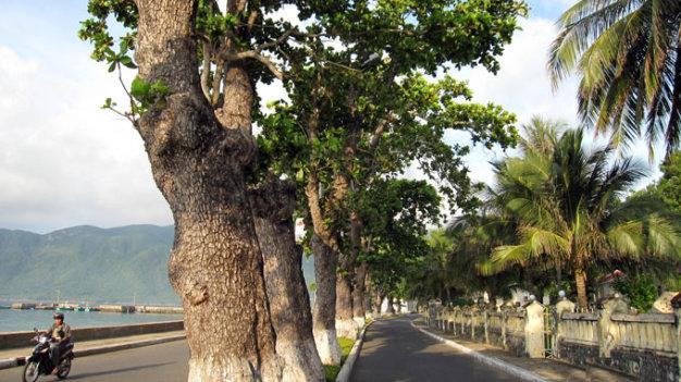 Con đường rợp bóng cây bàng ven bờ biển thị trấn Côn Đảo