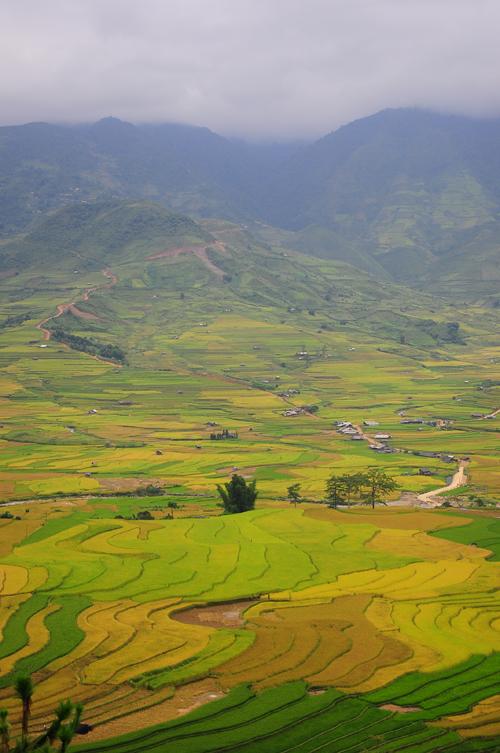 Lúa vàng Cao Phạ, dưới chân đèo Khau Phạ