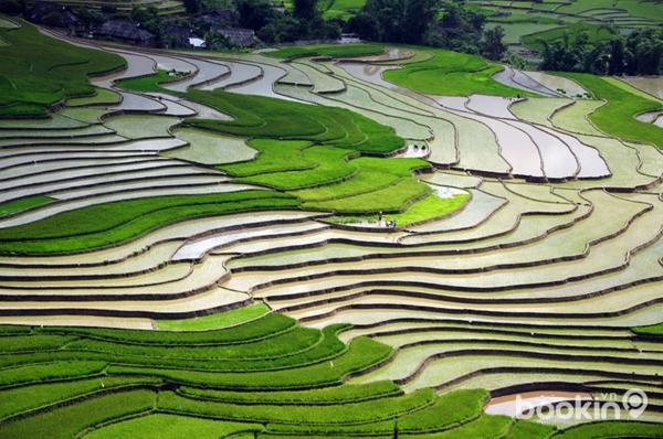 Ruộng bậc thang Việt Nam vào top 10 cảnh đẹp thế giới