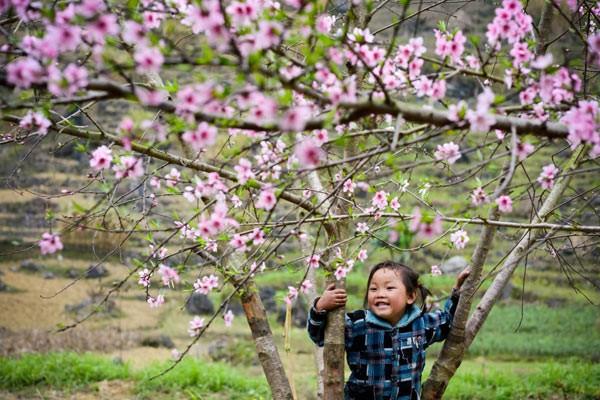 Em bé vui đùa trong vườn đào, Mộc Châu.