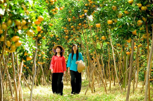 Vườn cây ăn trái Cái Mơn – Chợ Lách.