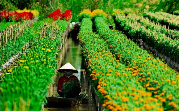 Làng hoa kiểng Sa Đéc.